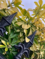 Close up of green leaves and black iron fence