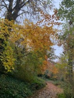 Autumn leaves on the trees and path